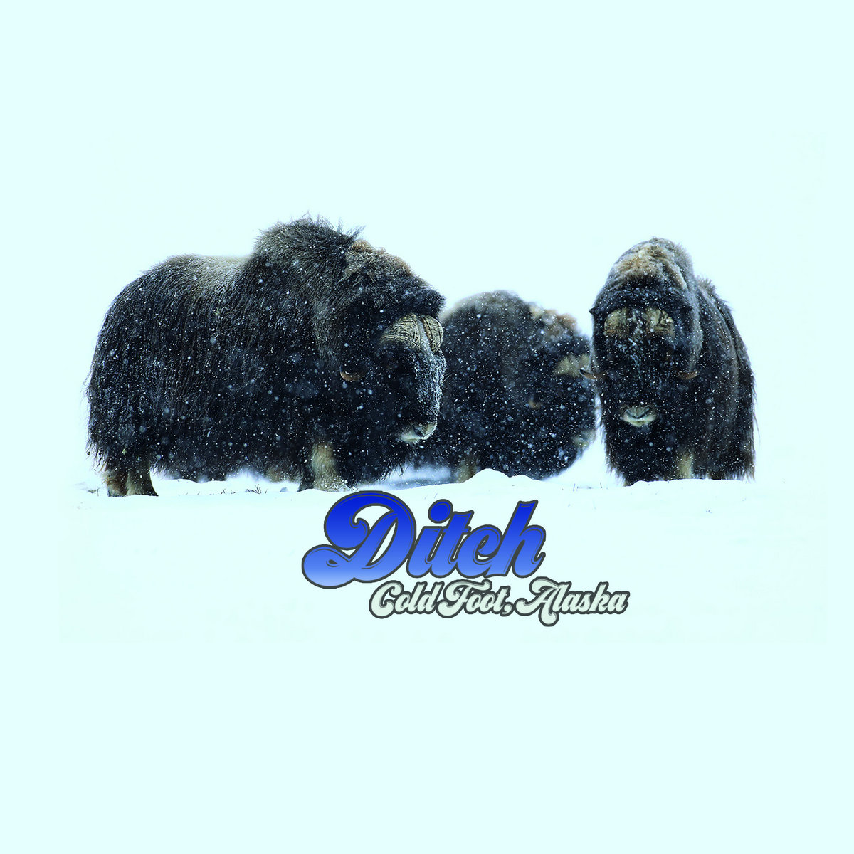 Reseña: DITCH.- 'Coldfoot, Alaska'